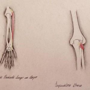 Anatomia10