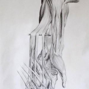 Anatomia12