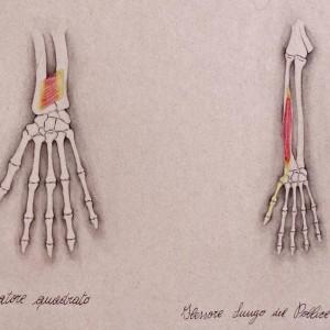 Anatomia6